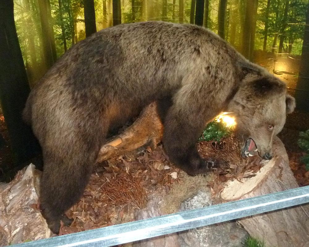 Wilderermuseum Bär